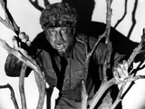 The Wolf Man  Lon Chaney  Jr  1941