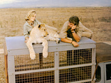 Born Free  Virginia McKenna  Elsa The Lioness  Bill Travers  1966
