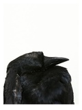 Crow Head