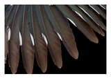 Roadrunner Wing