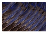 Bluebird Wing (detail)