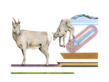 Migrating Mural Concept: Sierra Nevada Bighorn Sheep