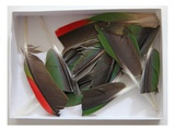 Parrot Feathers  no 1