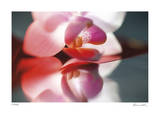 Floral Elements 10