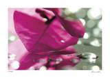 Floral Elements 12