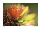 Floral Elements 1