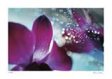Floral Elements 11