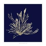 Seaweed on Navy III Reproduction d'art par Vision Studio