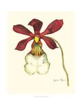 Majestic Orchid II