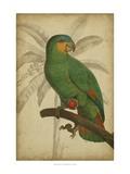Parrot and Palm I Reproduction d'art par Vision Studio