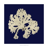 Seaweed on Navy IV