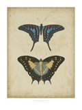 Antique Butterfly Pair III