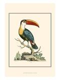 The Bill Bird