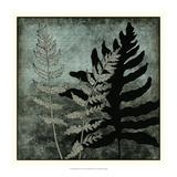 Illuminated Ferns I