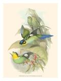 Small Bird of the Tropics I