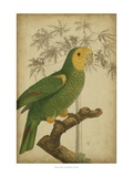 Parrot and Palm IV