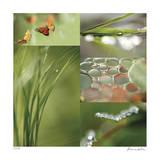 Fluttering Spring