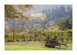 Oregon Vineyard 2