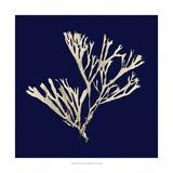 Seaweed on Navy II Reproduction d'art par Vision Studio