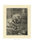 Vintage Roe Deer I