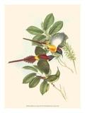 Small Bird of the Tropics III