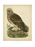 Antique Nozeman Owl I