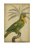 Parrot and Palm II