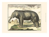 Diderot Elephant