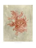 Coral in Terra Cotta