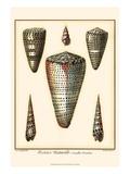 Redoute Shells II