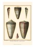 Redoute Shells I