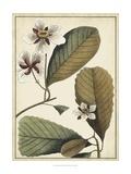 Ivory Botanical Study III