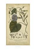 Floral Botanica I