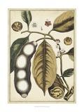 Ivory Botanical Study V