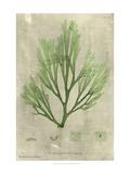 Emerald Seaweed II