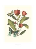 Midsummer Floral II