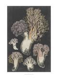Genus Clavaria I