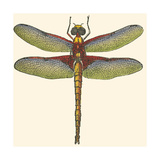 Miniature Dragonfly IV