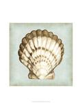 Sea Dream Shells III