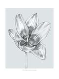 Silvery Blue Tulips II