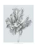Silvery Blue Tulips III