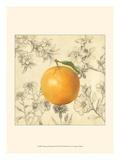 Orange and Botanicals