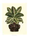 Lush Foliage in Urn II