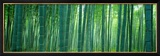 Bamboo Forest  Sagano  Kyoto  Japan