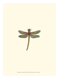 Miniature Dragonfly II