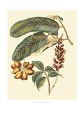Foliage  Flowers and Fruit IV