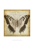 Carte Postale Butterfly II