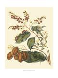 Foliage  Flowers and Fruit III