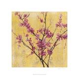 Fuchsia Blossoms I