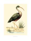 Water Birds I